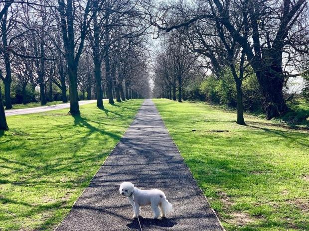 Bertie_on_walk